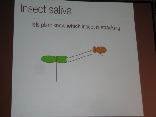 Plants can detect insect saliva