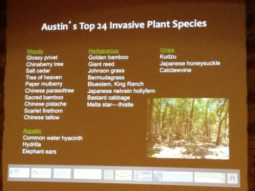Top 24 invasive plant species in the city of Austin