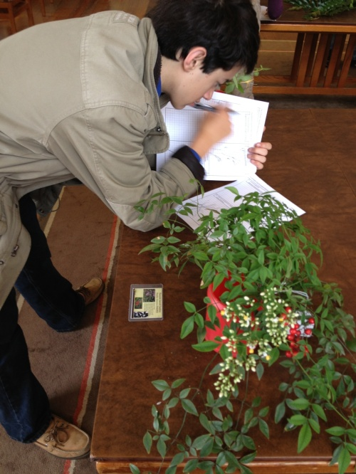 Learning up close how to identify invasive plants