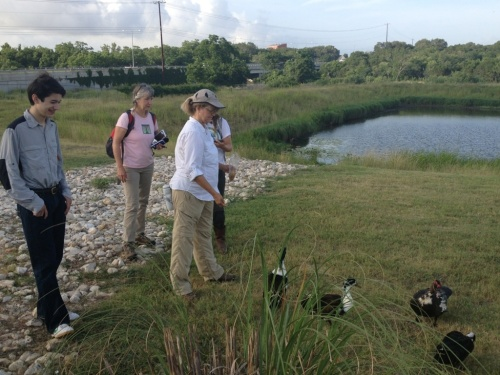 Some ducks waddled up to join our Austin citizen scientist team