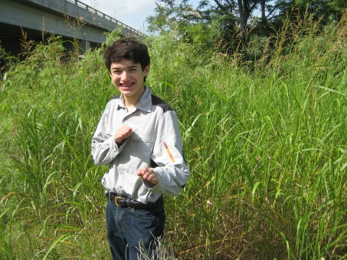 Johnson grass is no match to the invasive hunter moves of Austin citizen scientists