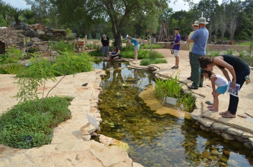 Play or hop across dinosaur creek at the Wildflower Center