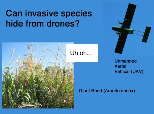 The Giant Reed can run, but it can't hide from drones (Photo credit: InView Unmanned Aircraft by Fasicle Wikipedia)